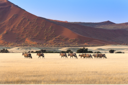 """Eco-Friendly"" durch Namibia, 18 Tage"