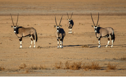 Namibia Highlights, 10 Tage