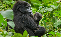 Bwindi Nationalpark