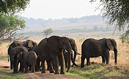 Kidepo Nationalpark