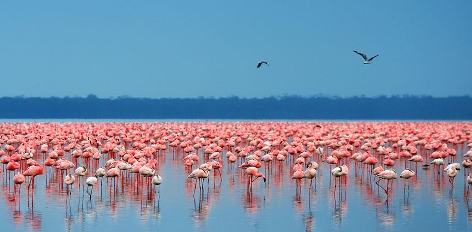 Kenja Safaris Flamingos im See