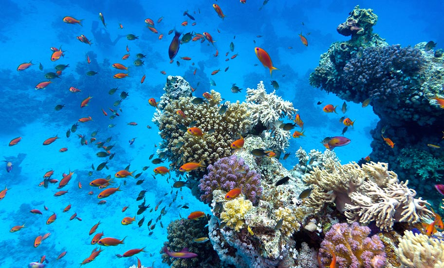 Madagaskar Korallenriff viele Fische Artenreichtum