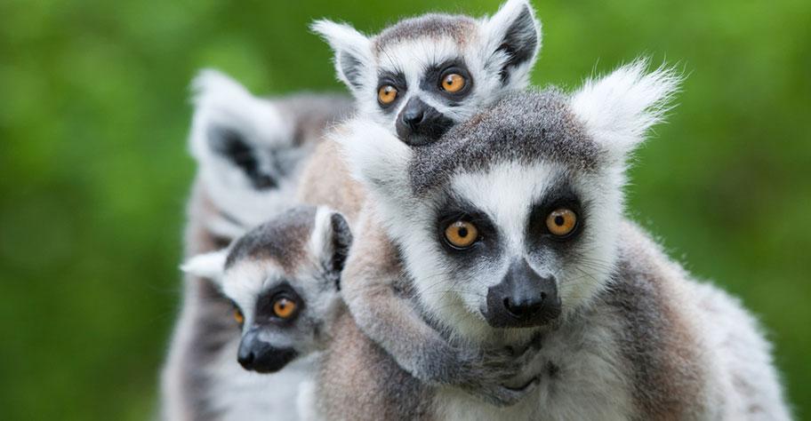 madgaskar strandferien ausflüge zu den lemuren unternehmen