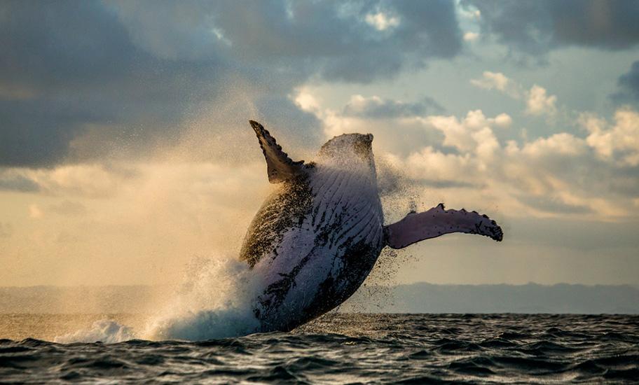 Madagaskar Tauchgang mit Walen