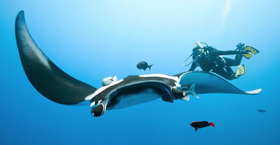 Manta Reef Tofo, Manta Fish mit Taucher