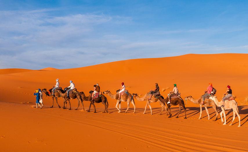 Karawana, Kamel, Wüste, Marokko