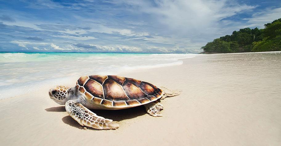 Mozambique Kinder Schildkröten Strand