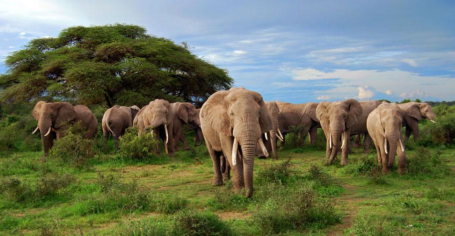 Botswana Luxus Safari Elefanten Herde