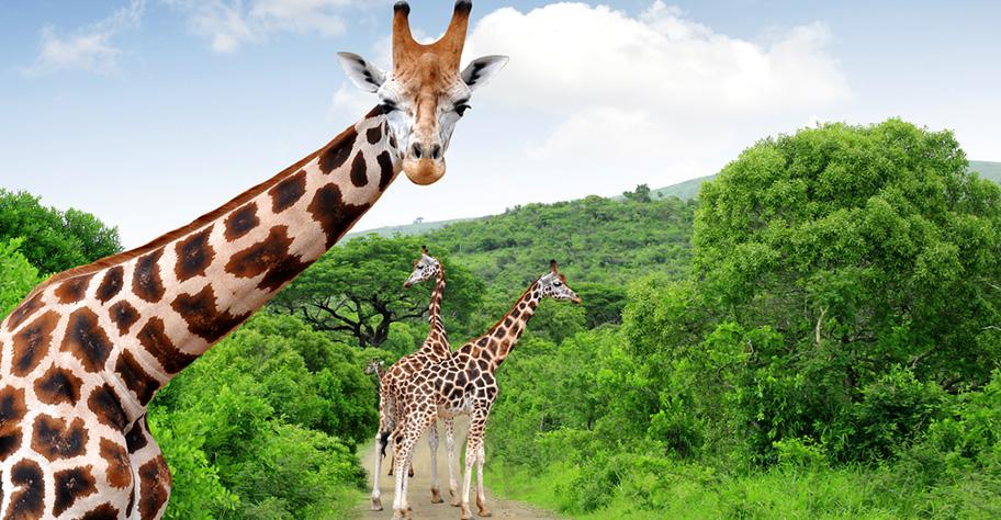 Südafrika Nationalparks nicht Hotelplan