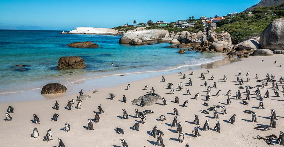 Südafrika Reisen mit Kindern günstig