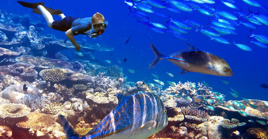Tauchen Zanzibar Junge Fische Artenreichtum