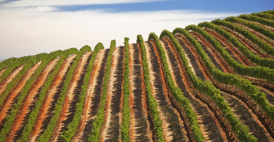 Weingut Stellenbosch nicht kuoni