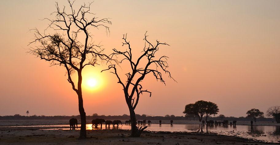 Zimbabwe Safari Elefanten beim sunset