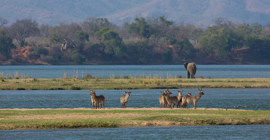 Mana Pool Zimbabwe Elefanten Safari