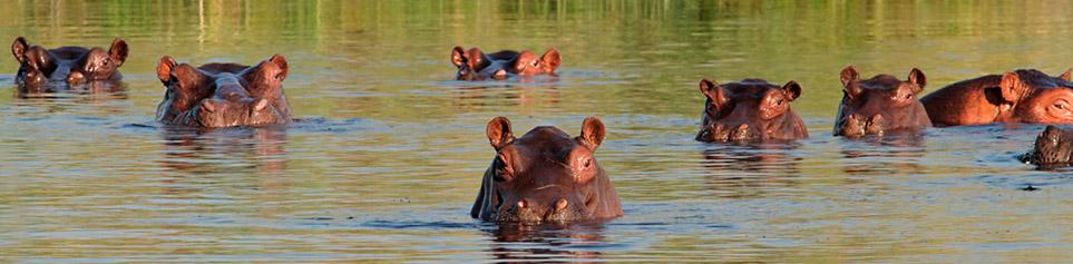 Reiseinformationen Sambia und Simbabwe