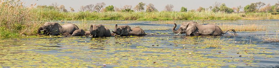 Botswana Reiseinformationen