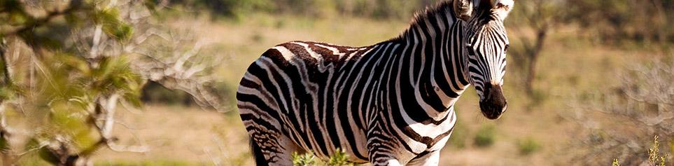 malawi safaris