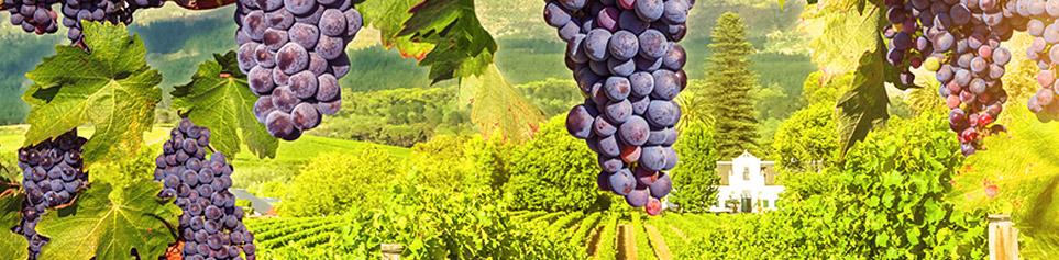 Südafrika Weinreisen